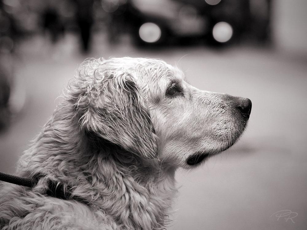 Hund-Hallstatt_SW.jpg