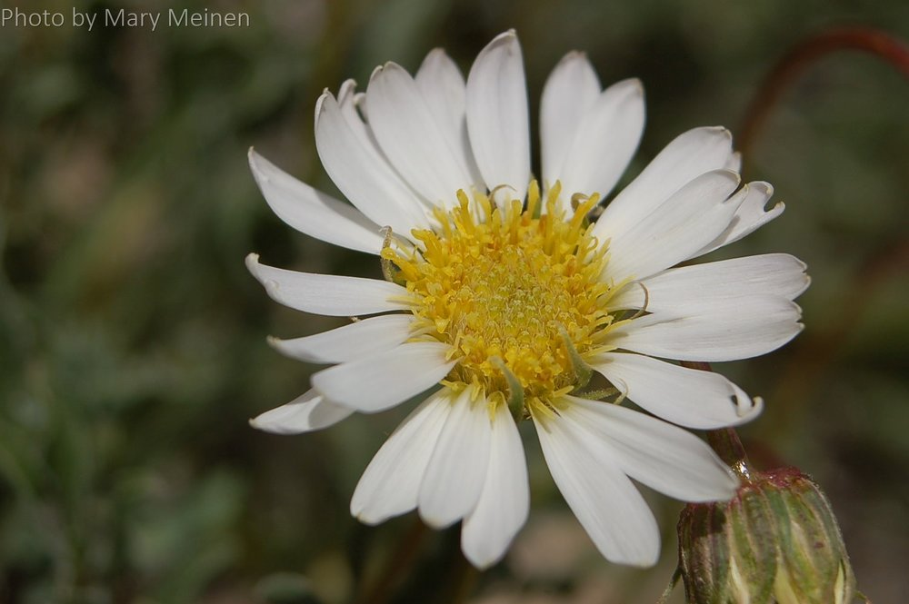 How many of us have picked wildflowers for Mom in spring? These beautiful flowers rekindle that desire in us this holiday.