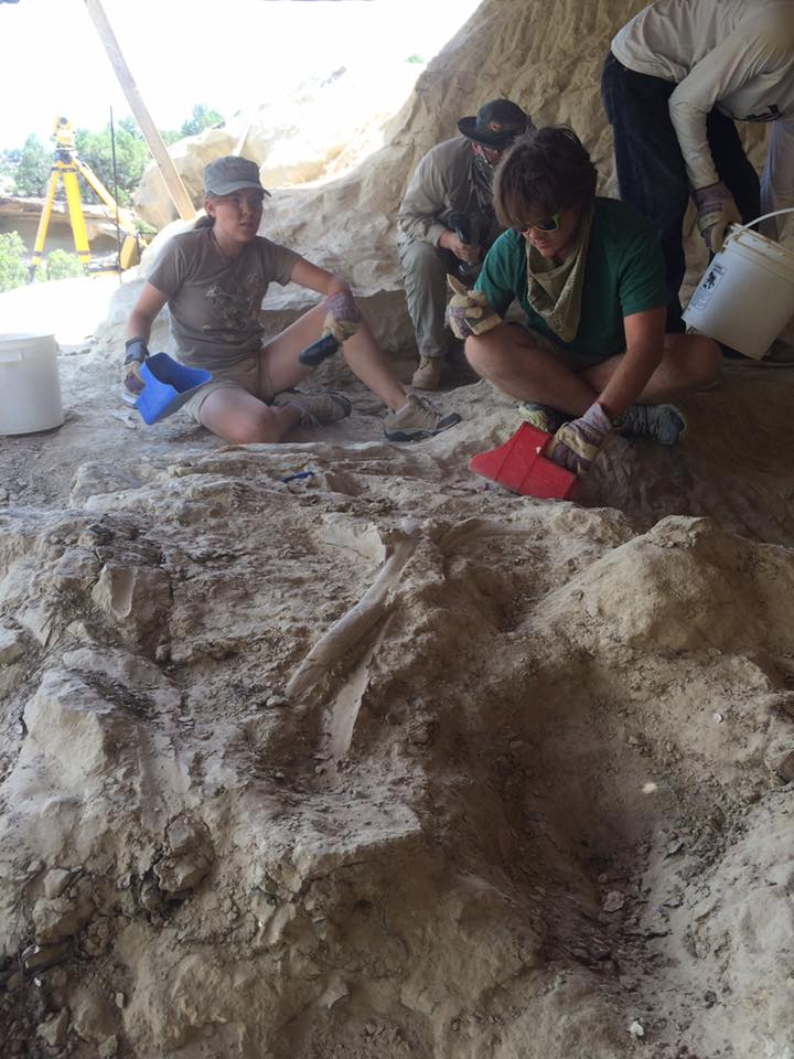Out at the paleontology dig site, Walter's ribs have been discovered! Irlanda and Hailey working on trenching around the ribs.