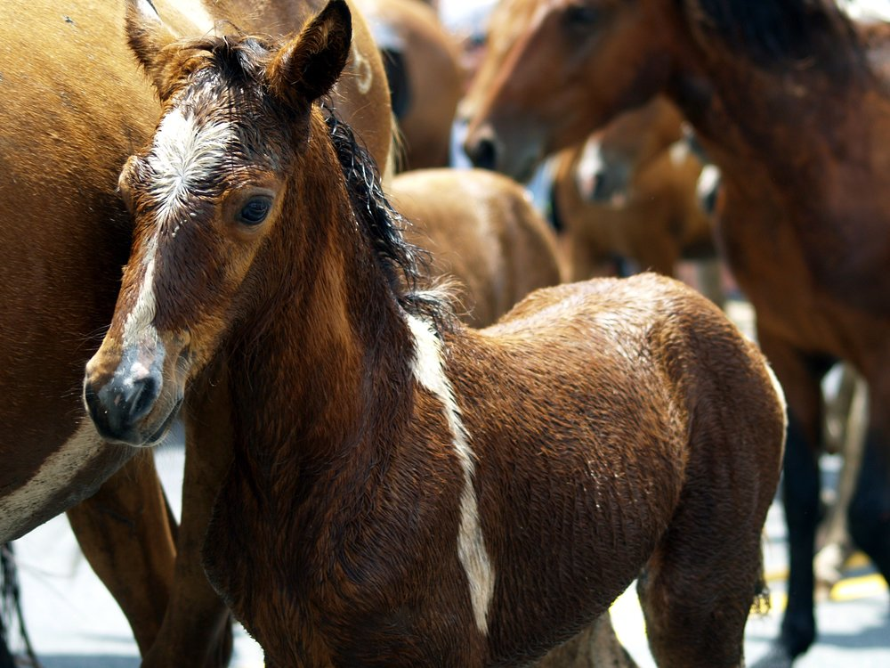 animals-herd-horses-37987.jpg
