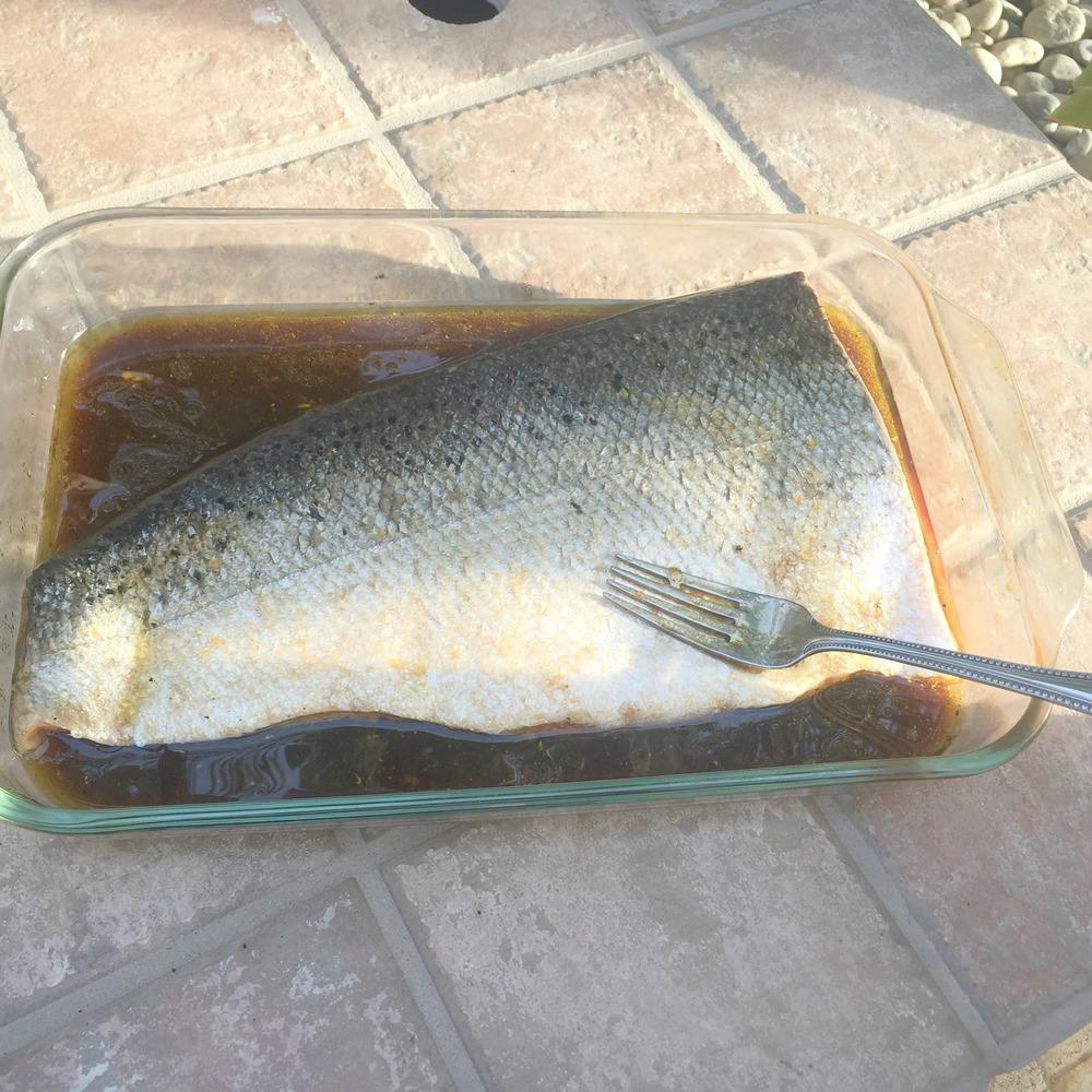 square salmon.jpg