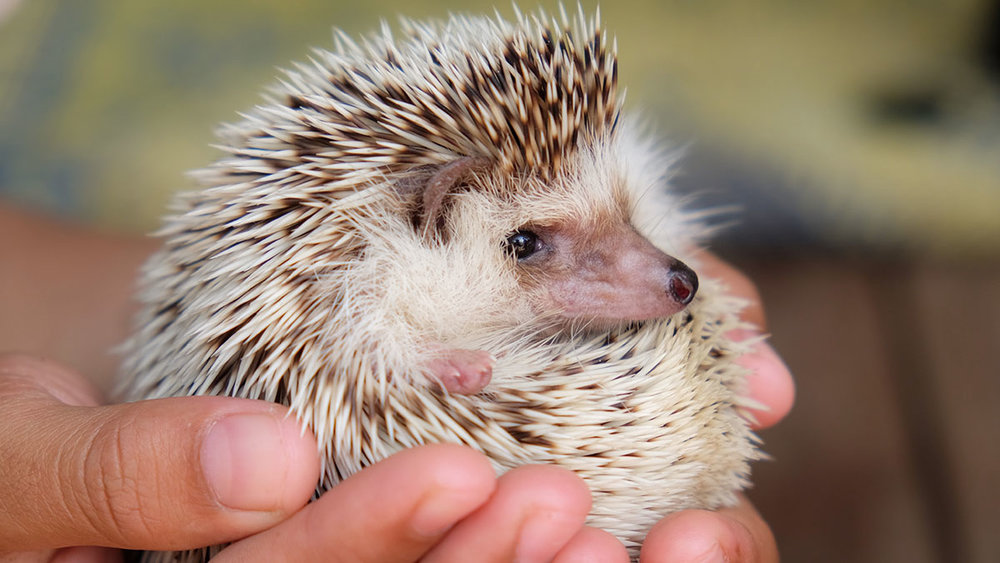 Tactile feedback lets you know this hedgehog is spiky, round, and lightweight. Visual feedback lets you know it's adorable.