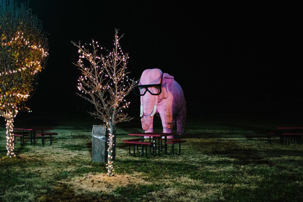 JB-17-AMERICA_PINK_ELEPHANTS.jpg