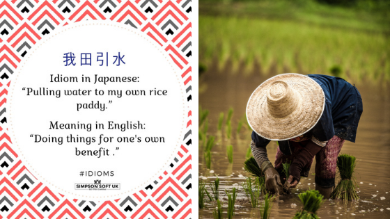 Japanese idiom - paddy.png