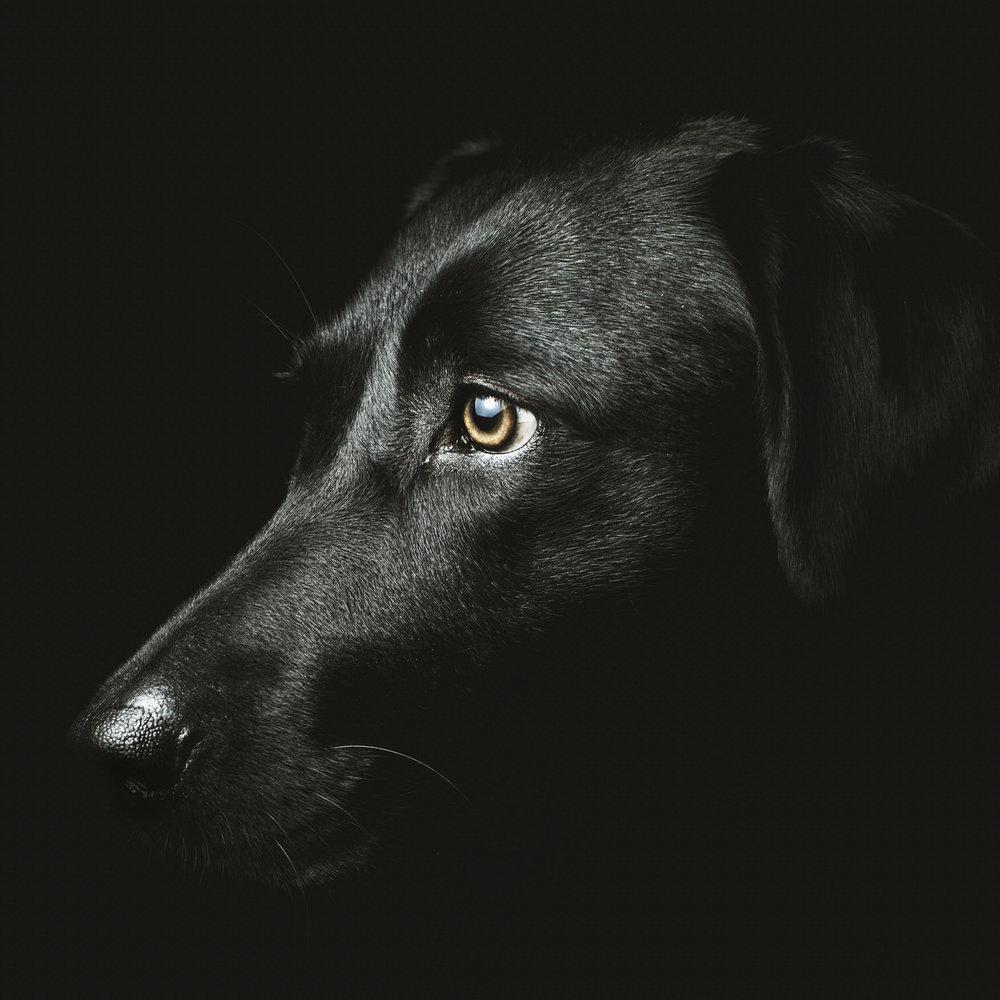 BlackLab.jpg
