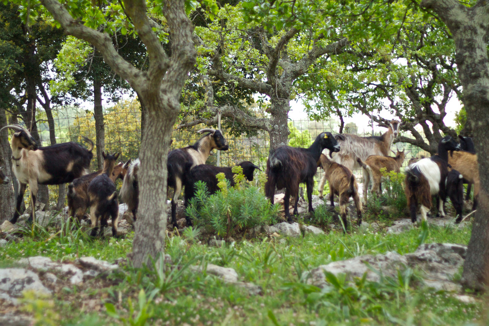 forest-villas-crete-farm-horse-12.jpg