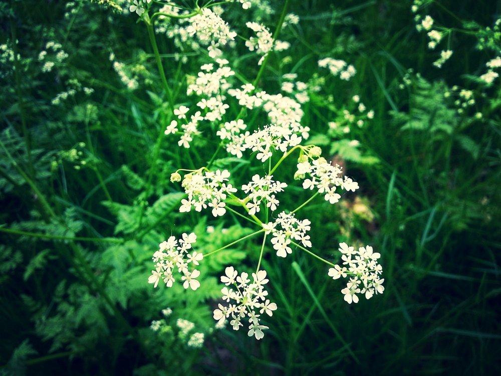 flower-451145_1280.jpg