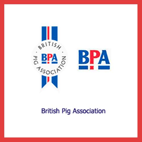 BritishpigAssociacion.jpg