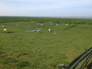 Nord Friesland salt marsh