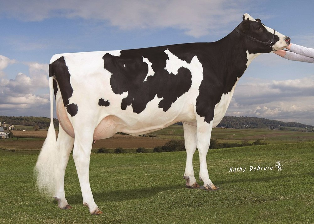 Endco Yoder L7933-9839, dam of the top genomic bull Pine-Tree CW Legacy