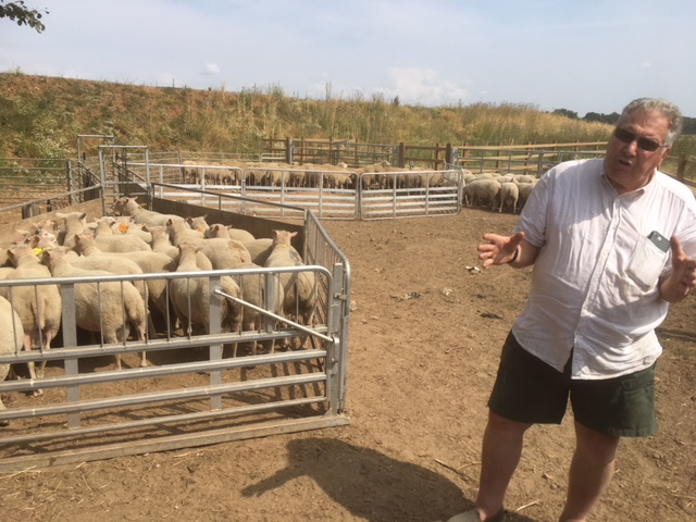 David Eglin presenting his Charmoise ram lambs