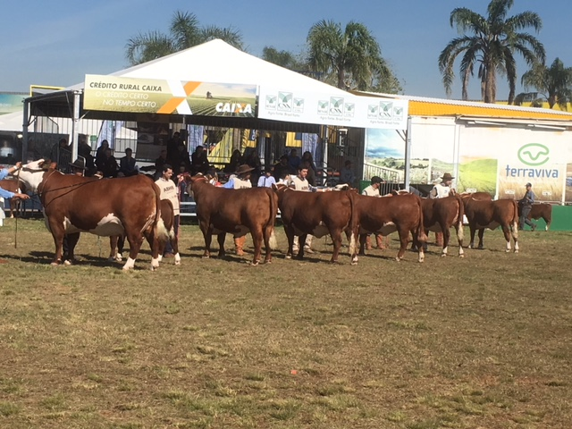 Hereford Judging
