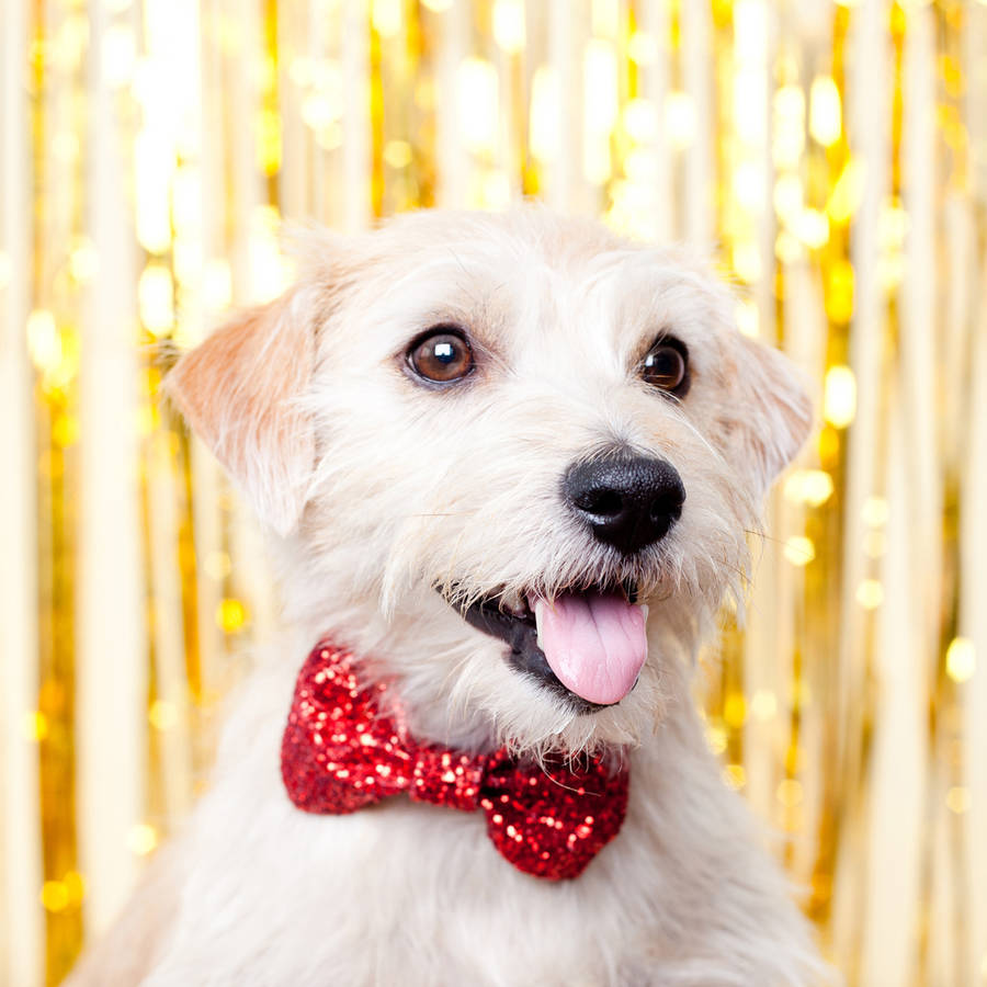original_red-sparkly-christmas-pet-bow-tie.jpg