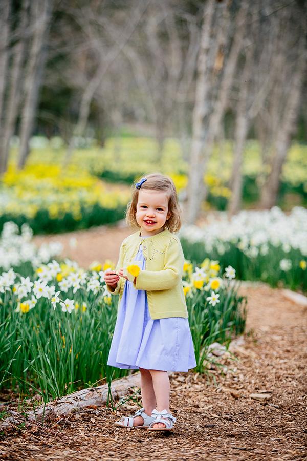 daffodil minis.jpg