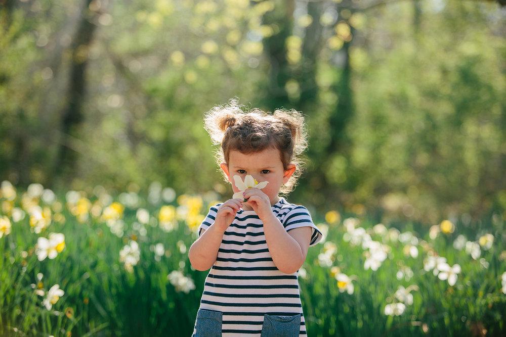 dartmouth daffodils.jpg