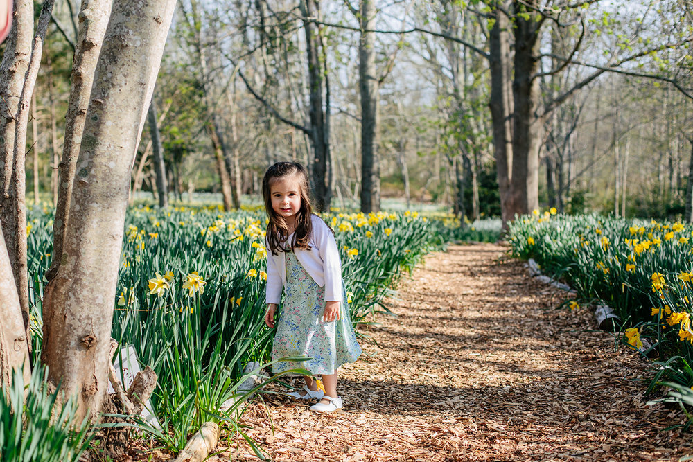 dartmouth daffodil field.jpg