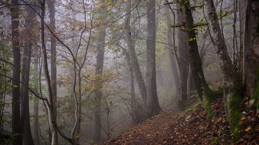 Zsofia_Daniel_Trees-2.jpg