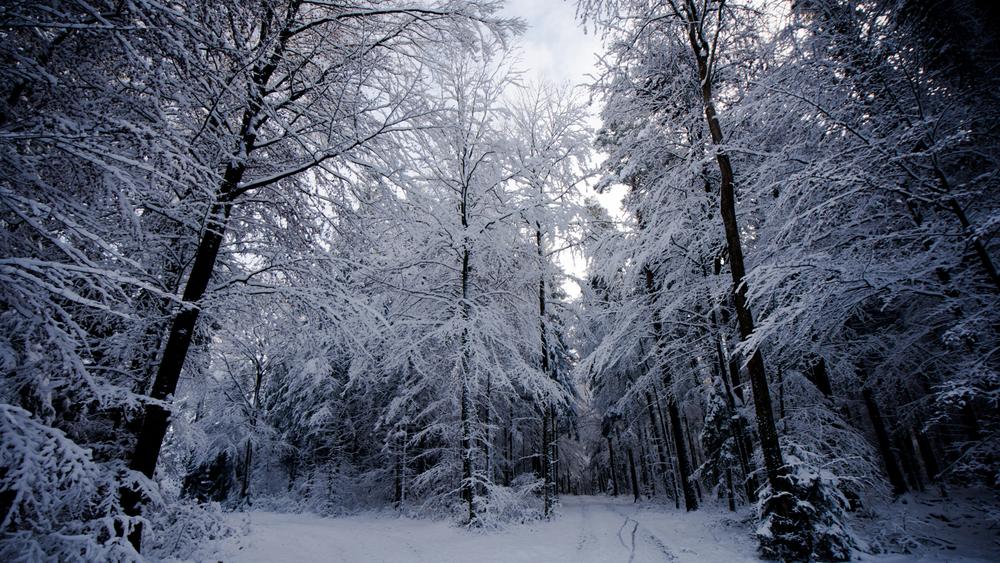 Zsofia_Daniel_Trees-21.jpg