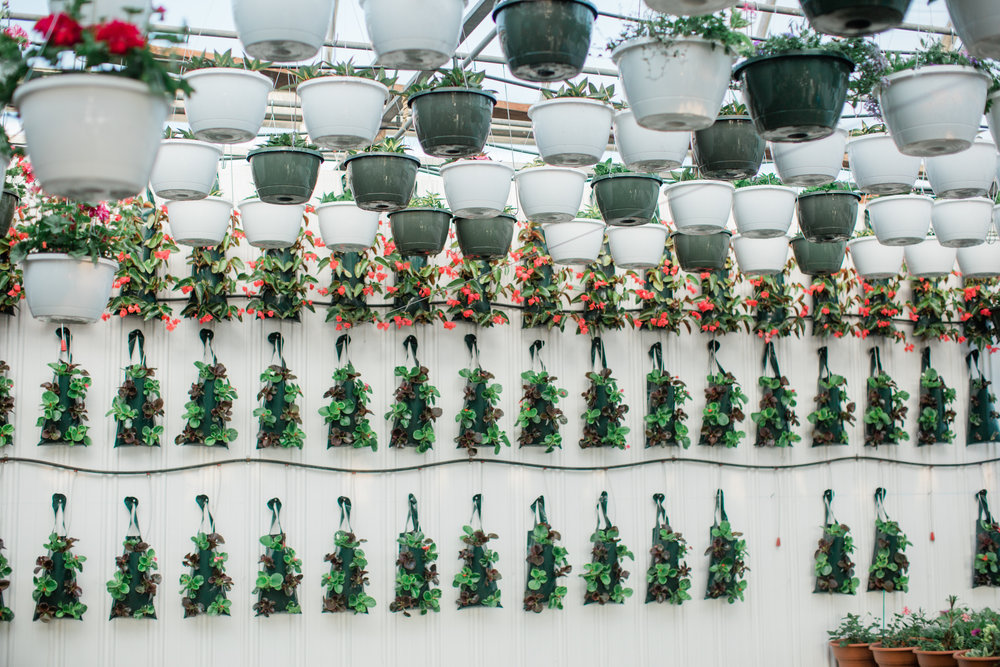 I was amazed by this wall display of hanging plants.