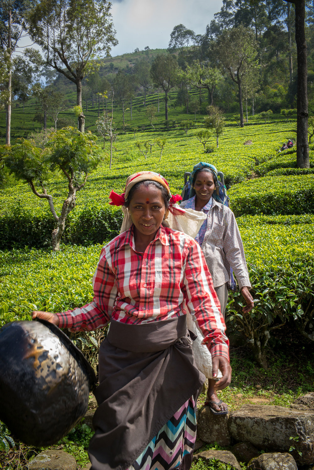 Tea pickers, Haputale, Hill Country, Uva Province
