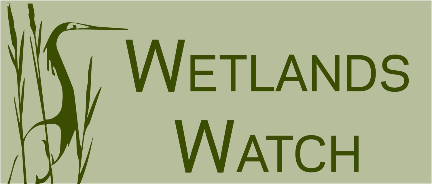 Wetlands Watch