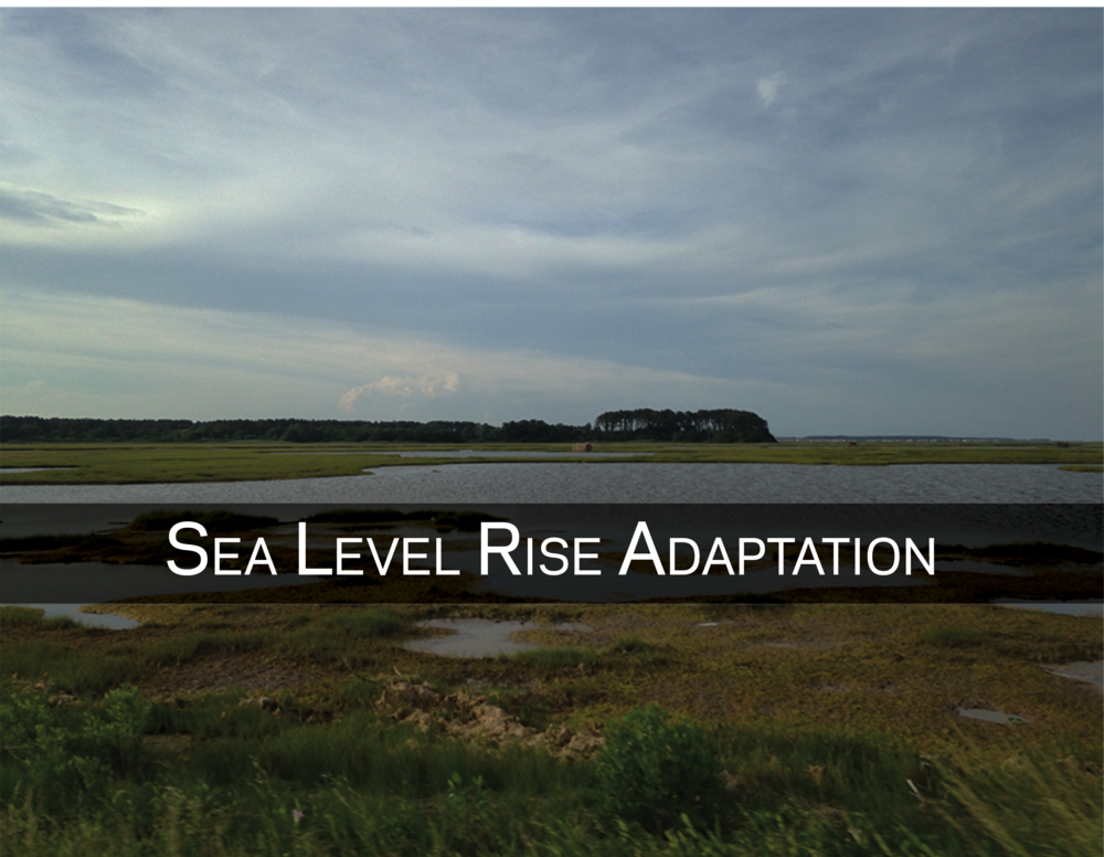Rising seas endanger Virginia's tidal wetlands. Learn more about our adaptation efforts here -