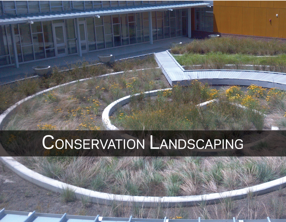Creating resilient landscapes and shorelines with nature-based solutions -
