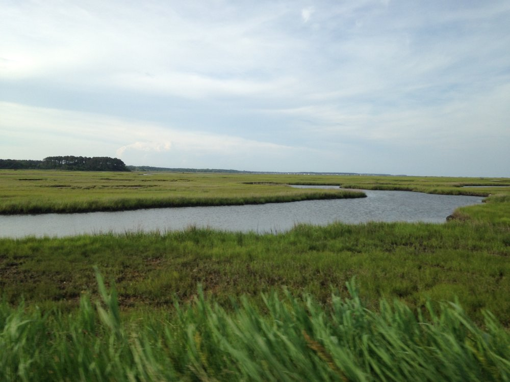 Norfolk, Virginia - The City's Wetlands Board protects the CBPA from encroachment by prohibiting mowing of tidal wetlands. Property owners must obtain permission to remove vegetation, which must then be mitigated by replacement with native vegetation. The departments of Environmental Service and Public Works collaborate to ensure all buffer projects count towards the City's MS4 Permit and Chesapeake Bay TMDL.
