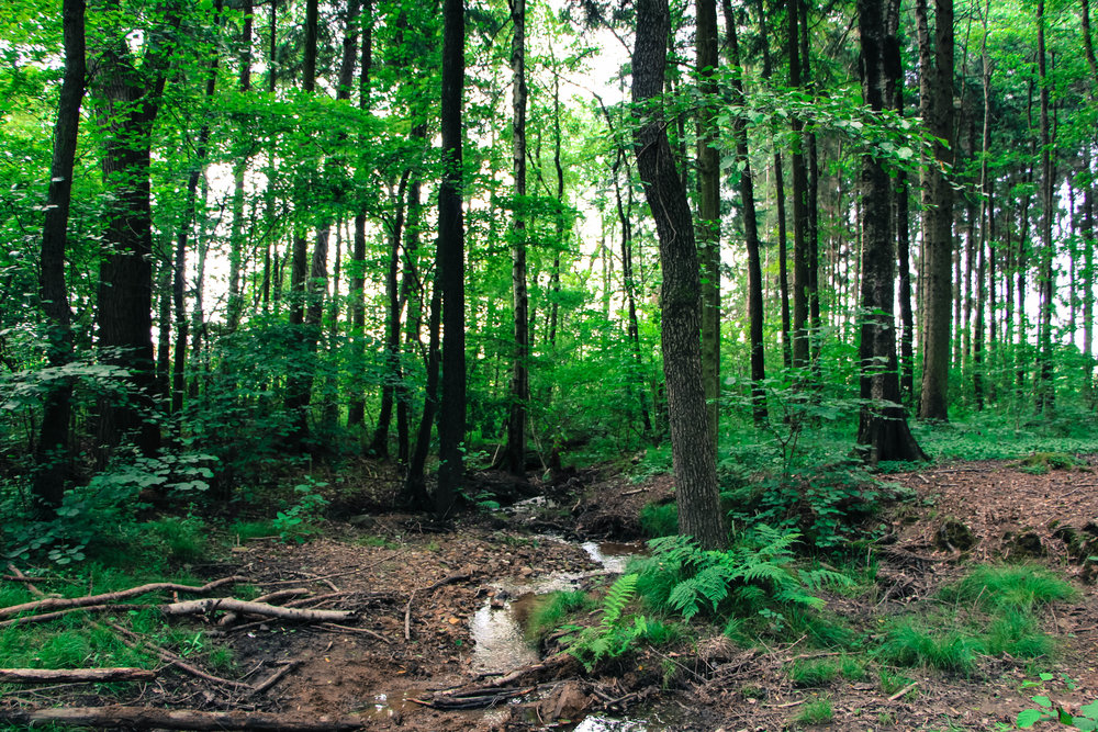 30 VA localities utilize Ag & Forestal Districts, covering over 730,000 acres  -