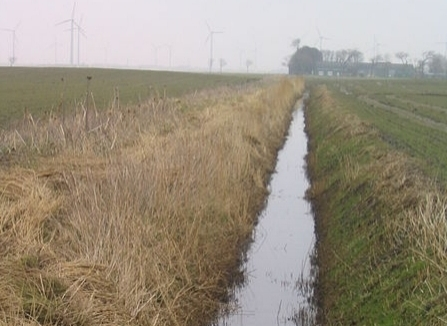 There has been some question as to whether a ditch that rarely dries out is considered a jurisdictional wetland. Following the Rapanos ruling, the EPA and the USACE issued a memo clarifying their jurisdiction through the Clean Water Act. That guidance states that,