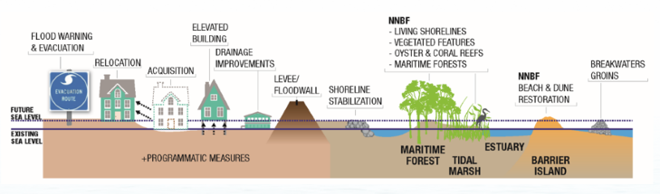 Click to enlarge a cross-section showing resilient coastal solutions (source:  ACOE )