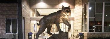 JWU's Charlotte Campus wildcat statue