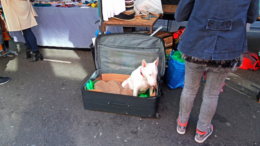Dog on Broadway Market