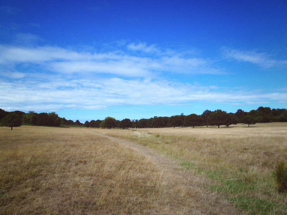Richmond Park (own photo)