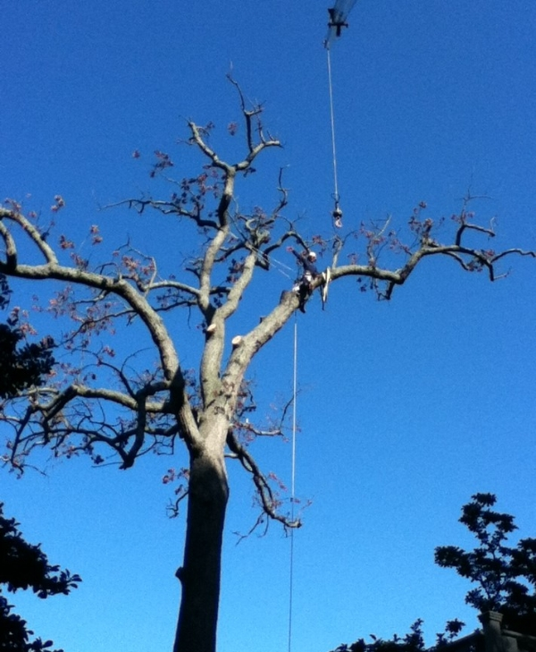 crane tree.JPG
