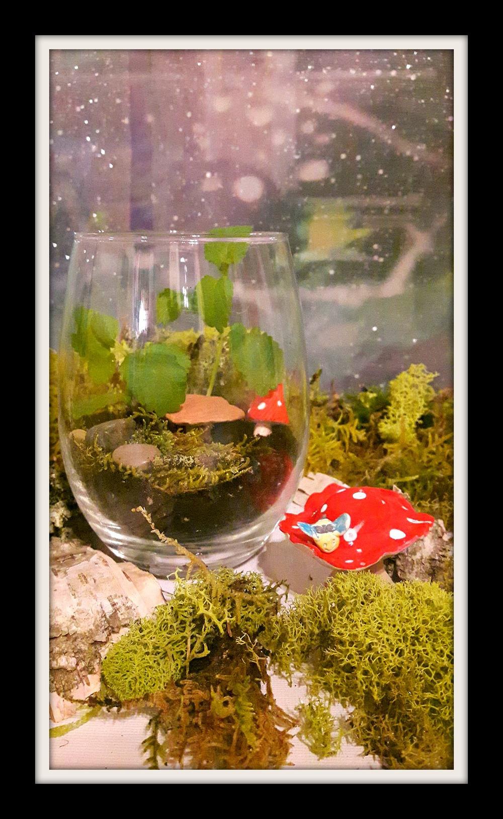 Create your own terrarium 12-17 2.jpg