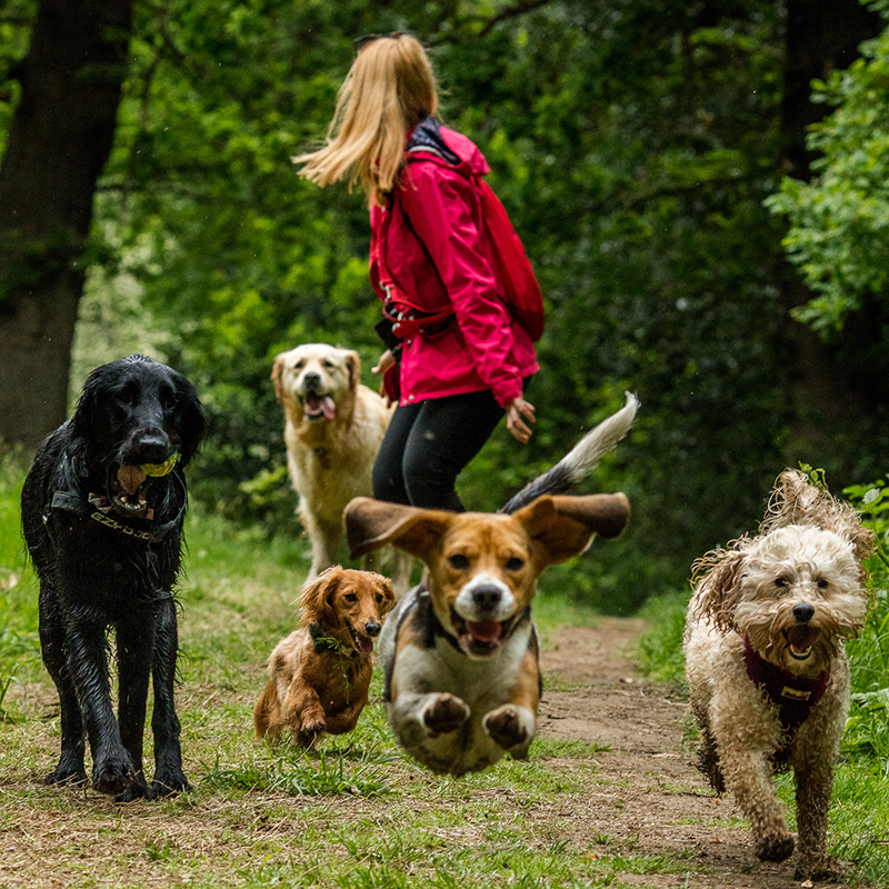 Sociable Hounds -