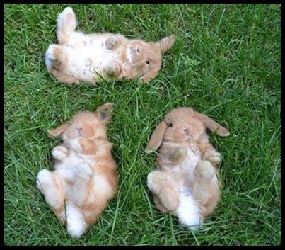 cute-baby-bunnies-grass-laying-down.jpg
