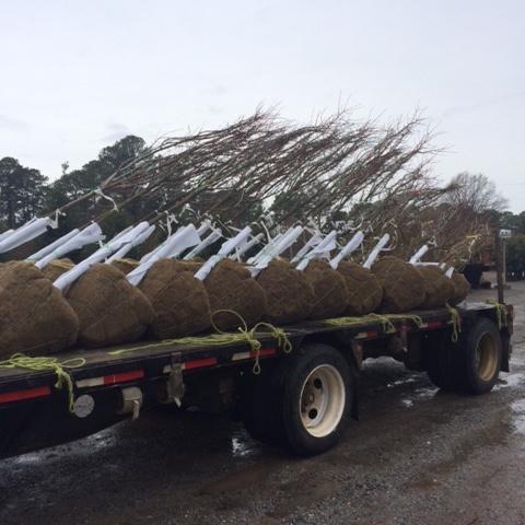 truck_trees.JPG