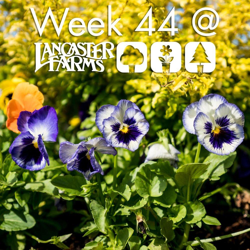 week_44_header.jpg