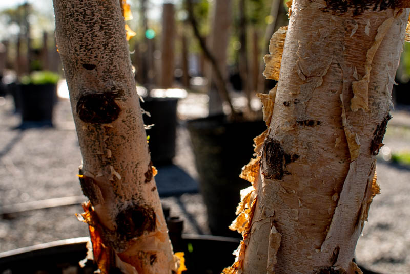 April_Trees-3.jpg