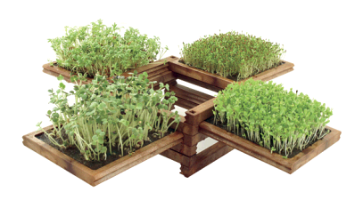 Earth Day Special Mini Gardens Solifestyle