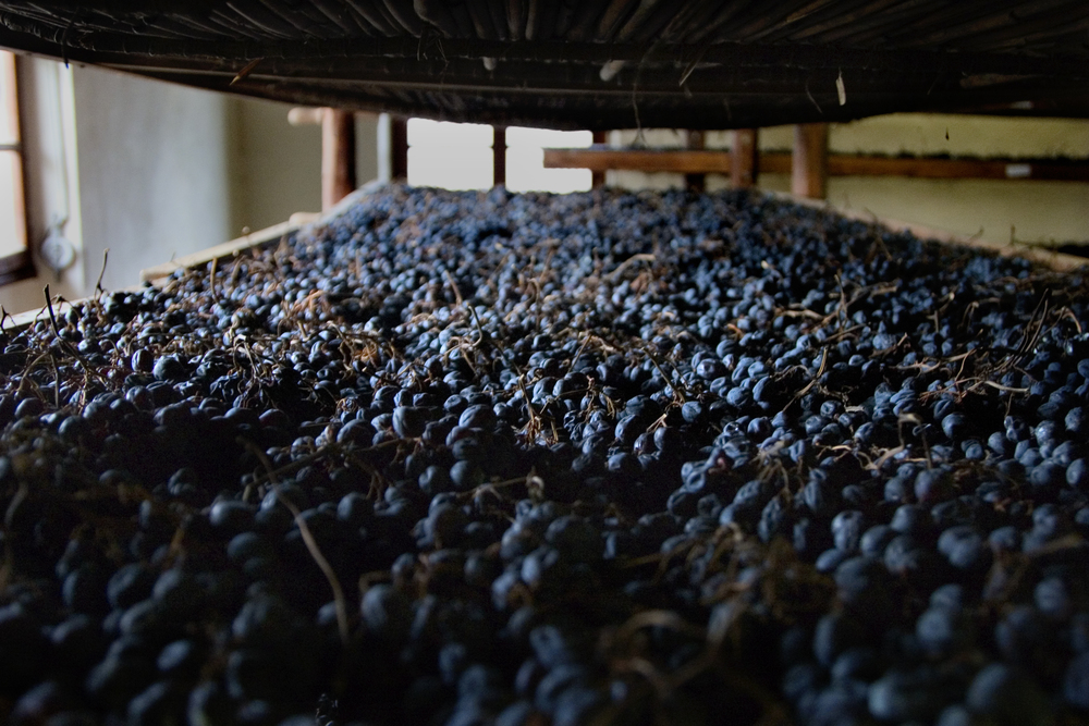 Grapes in the fruit drying loft called a 'fruttaio' in the magical process of appassimento