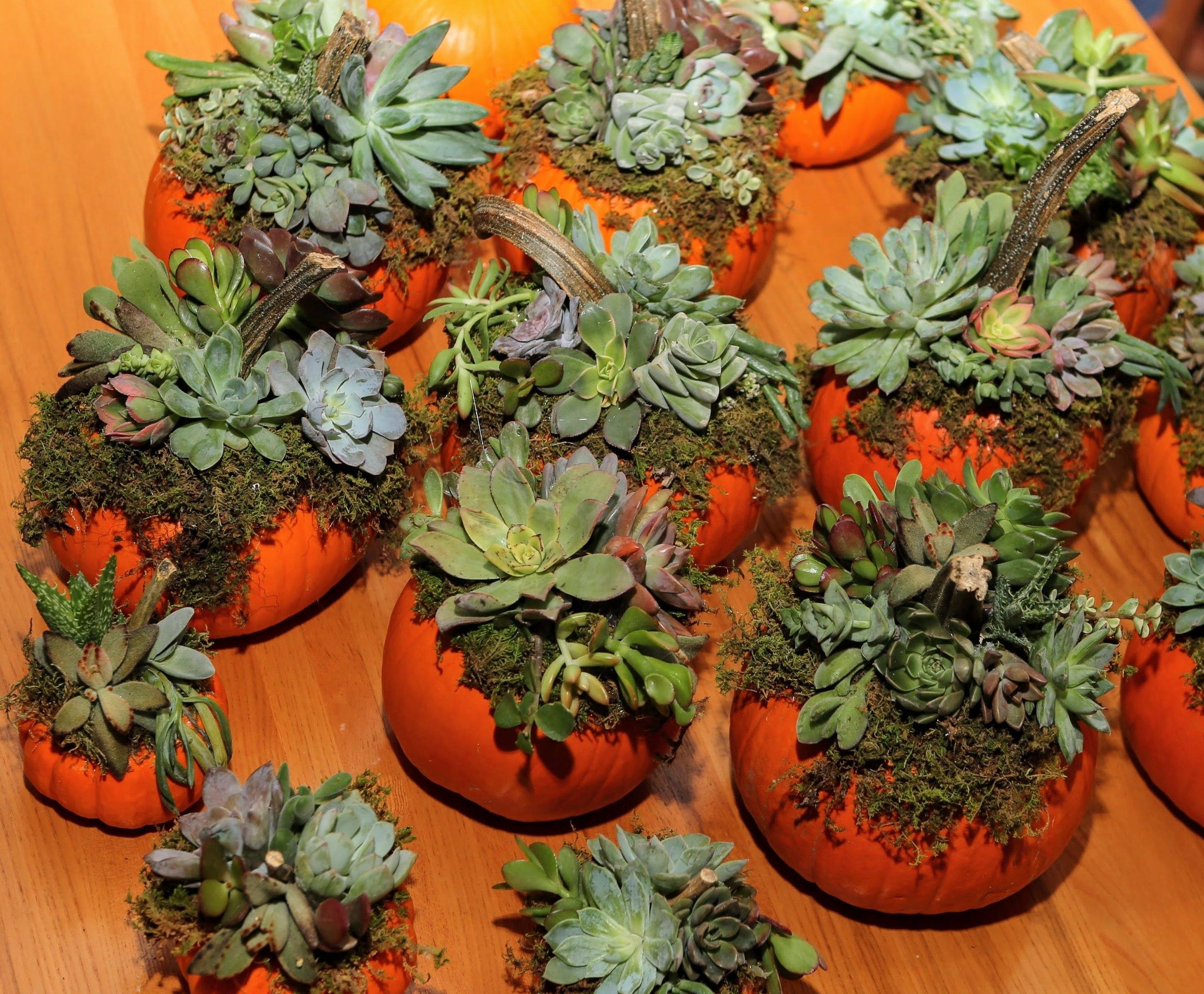 Succulent Pumpkin Centerpieces Blooming Artisan