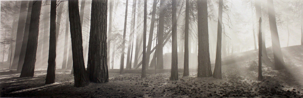 DAVID H. GIBSON, Luminous Forest, Yosemite National Park, California, 1995