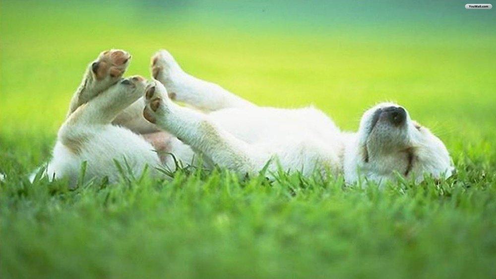 cute-sleeping-puppy-wallpaper.jpg