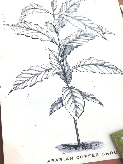 05_shrub.jpg