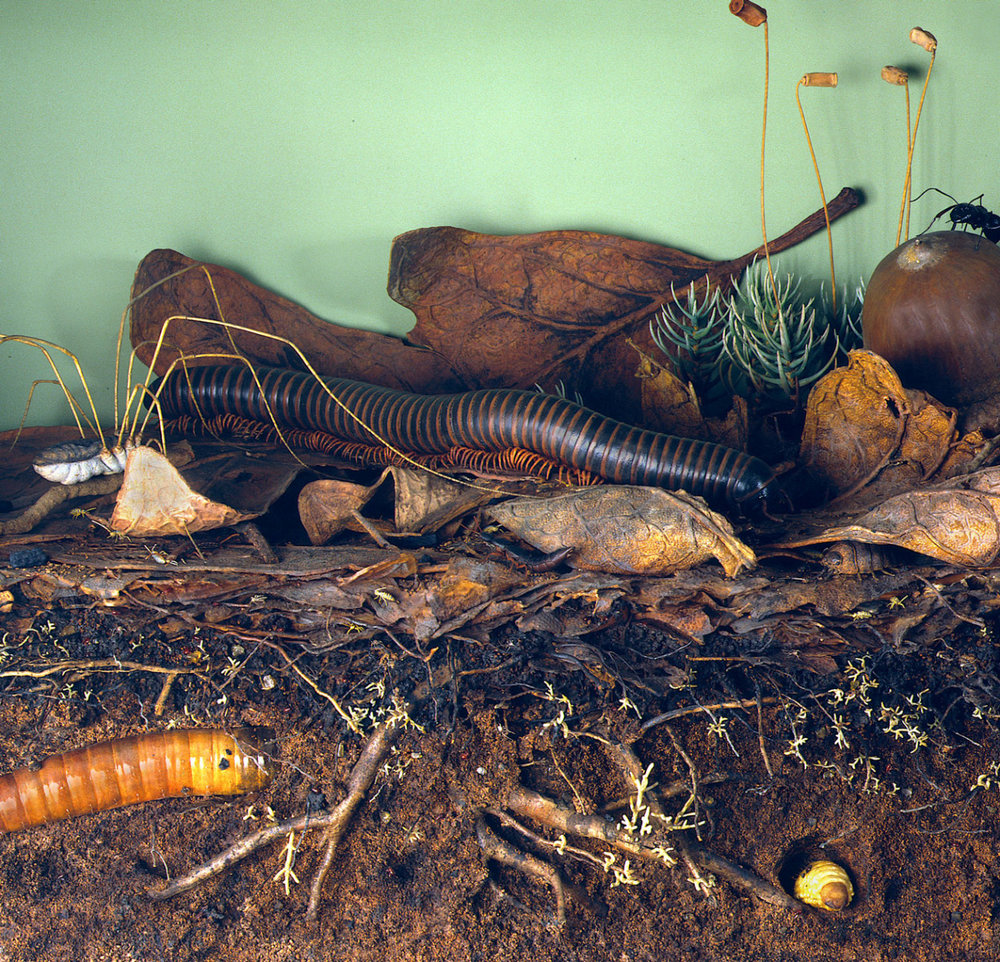 American Museum of National History:    Life on the forest floor    diorama