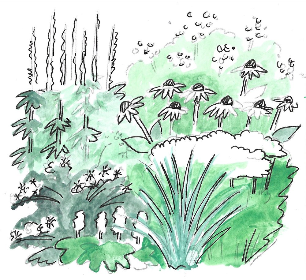 Drawing by Mackenzie Younger of the plants to be used in the white garden