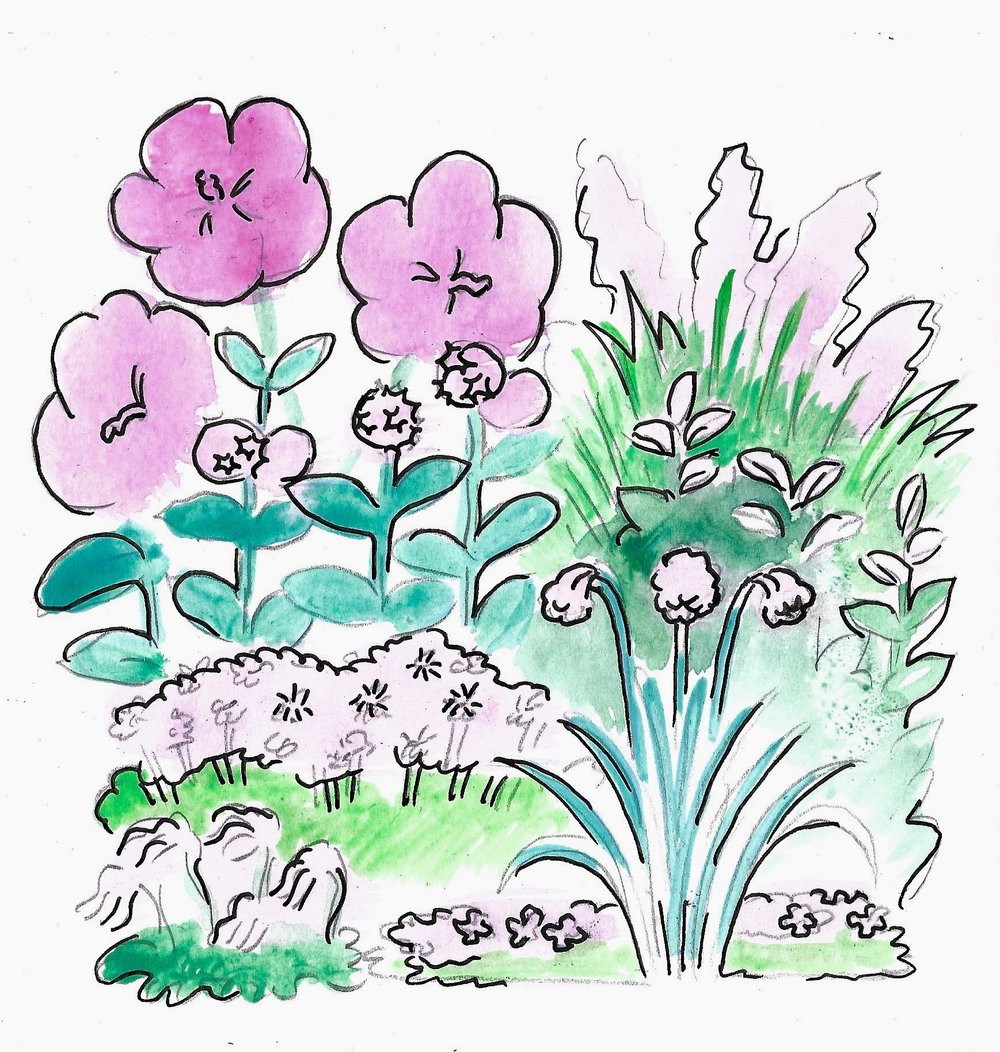 Drawing by Mackenzie of plants to be used in our Pink Garden